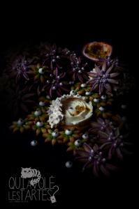 Carnivorous Passiflorouse - La Passion Dévorante - Dessert sans gluten  ©Photographie et stylisme culinaire Qui a volé les tartes ?